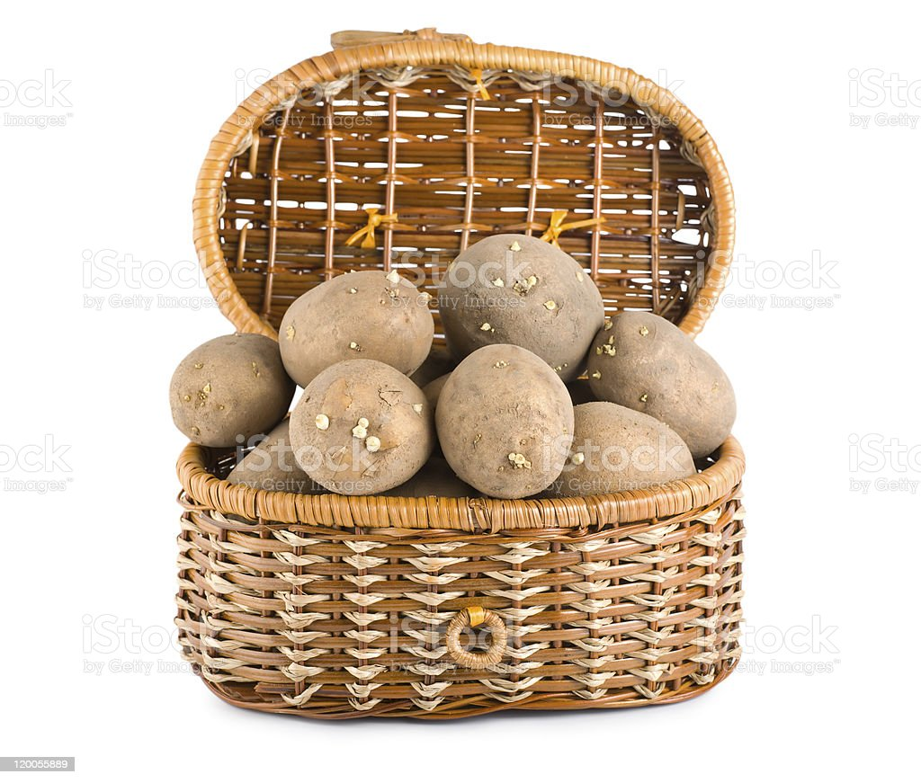 Raw potatoes in a basket royalty-free stock photo