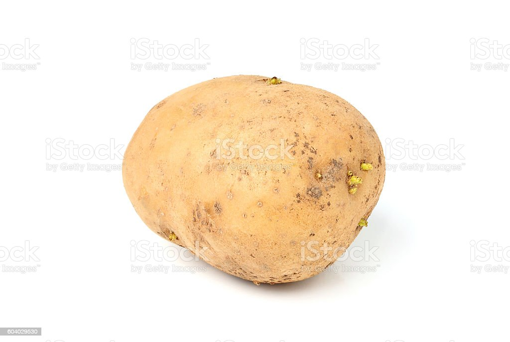 Raw potatoes isolated  closeup. stock photo