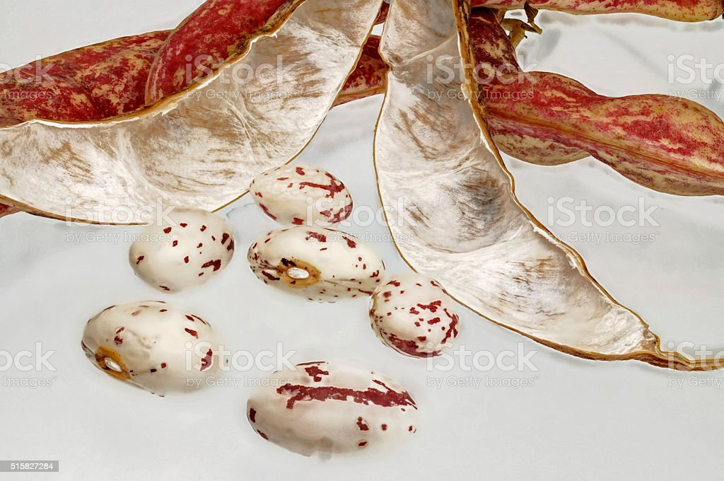 raw red runner beans with Huelse stock photo