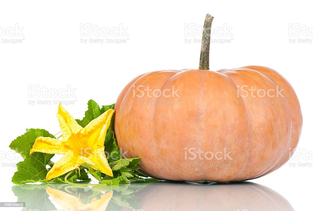 Raw round pumpkin stock photo