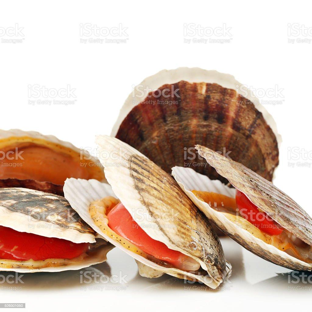 Raw scallop stock photo