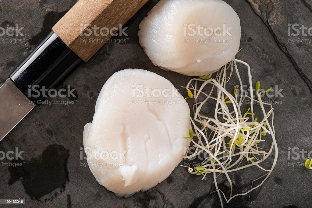 Raw Scallops stock photo