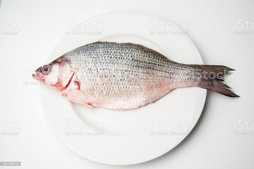 raw sea bass stock photo