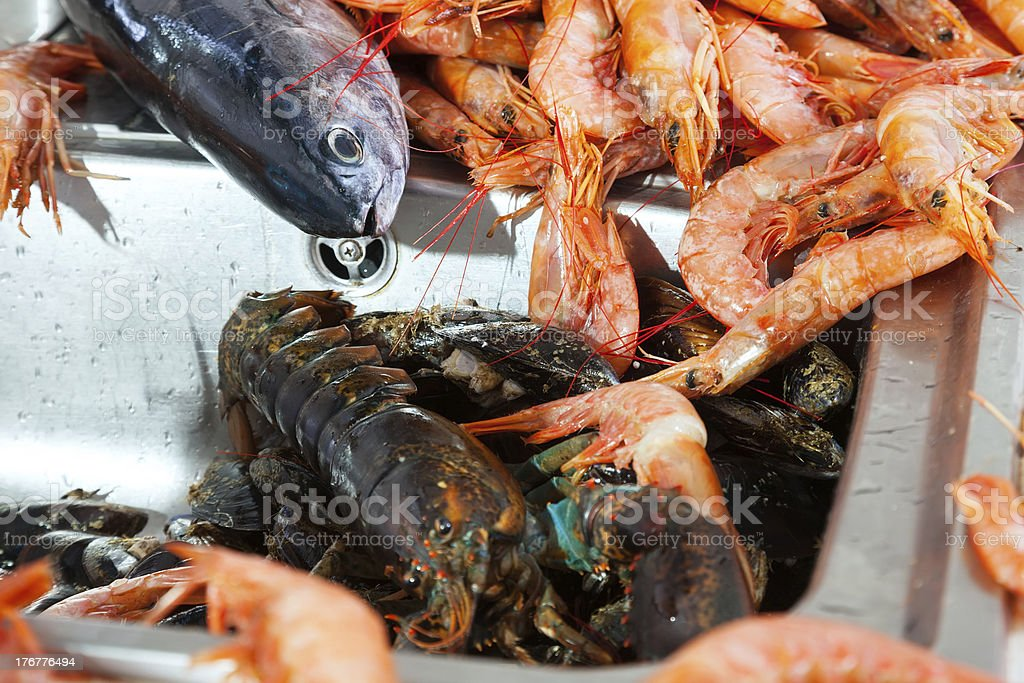 raw sea foods at kitchen sink royalty-free stock photo