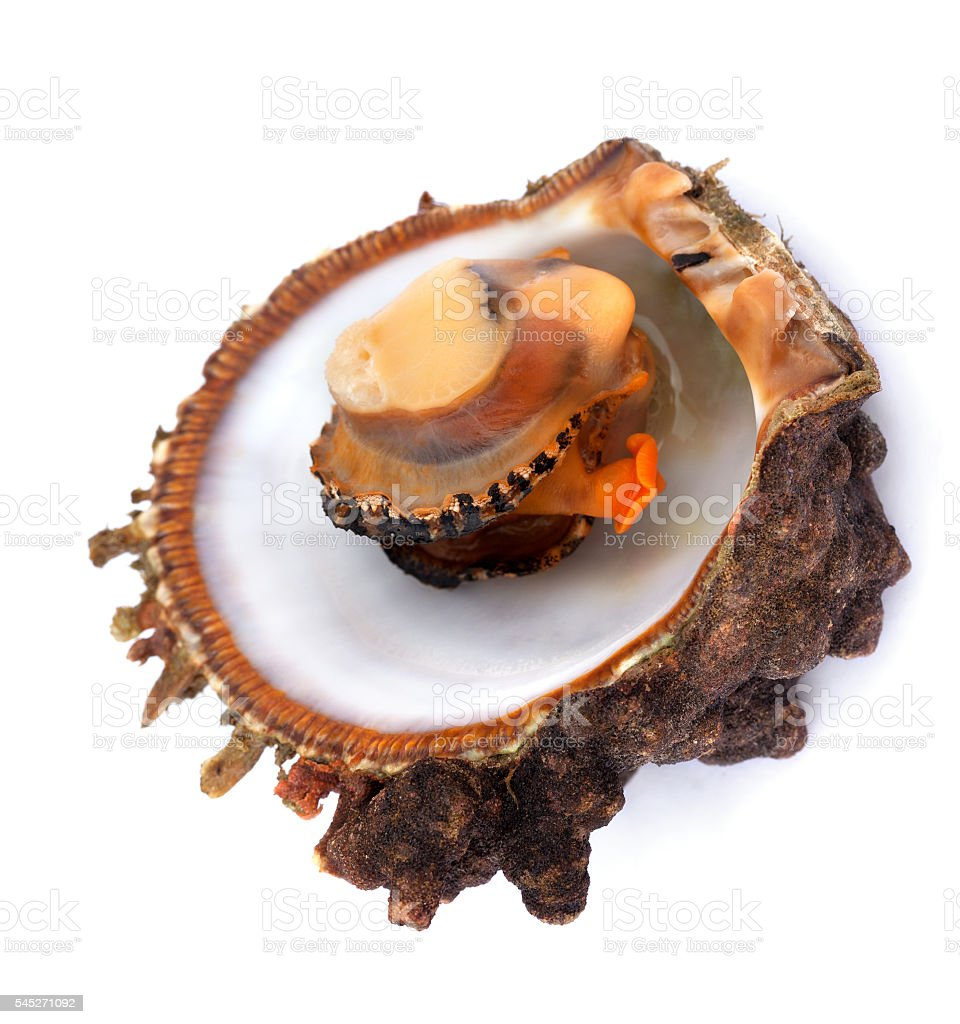 Raw seafood in opened shell stock photo