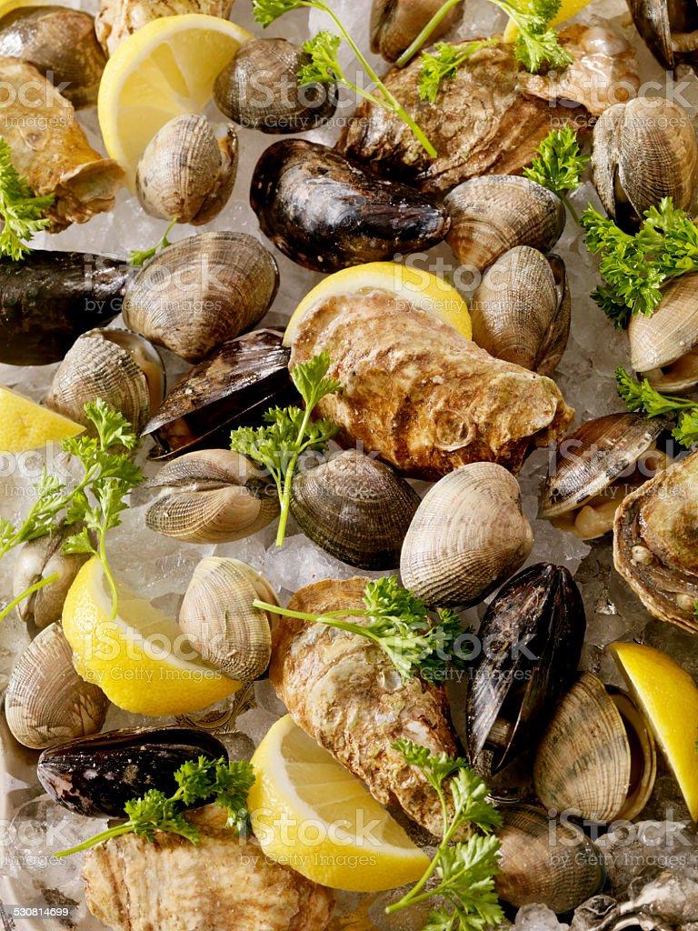 Raw Shellfish stock photo