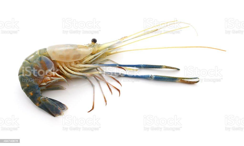 Raw shrimp isolated on white background. stock photo