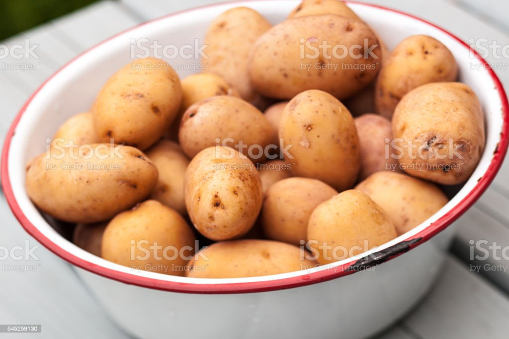 Raw small potatoes in metal bowl on wood table stock photo