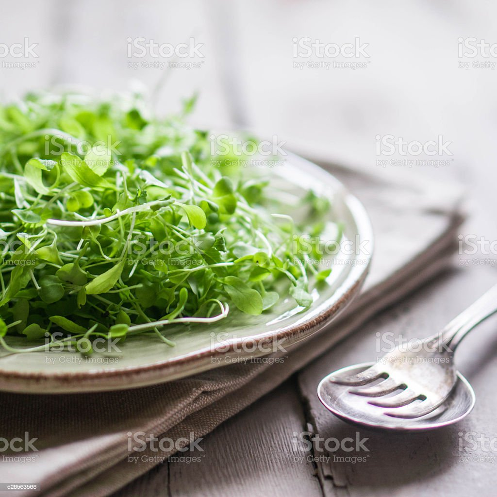 Raw sprouts(microgreens) on wooden background stock photo