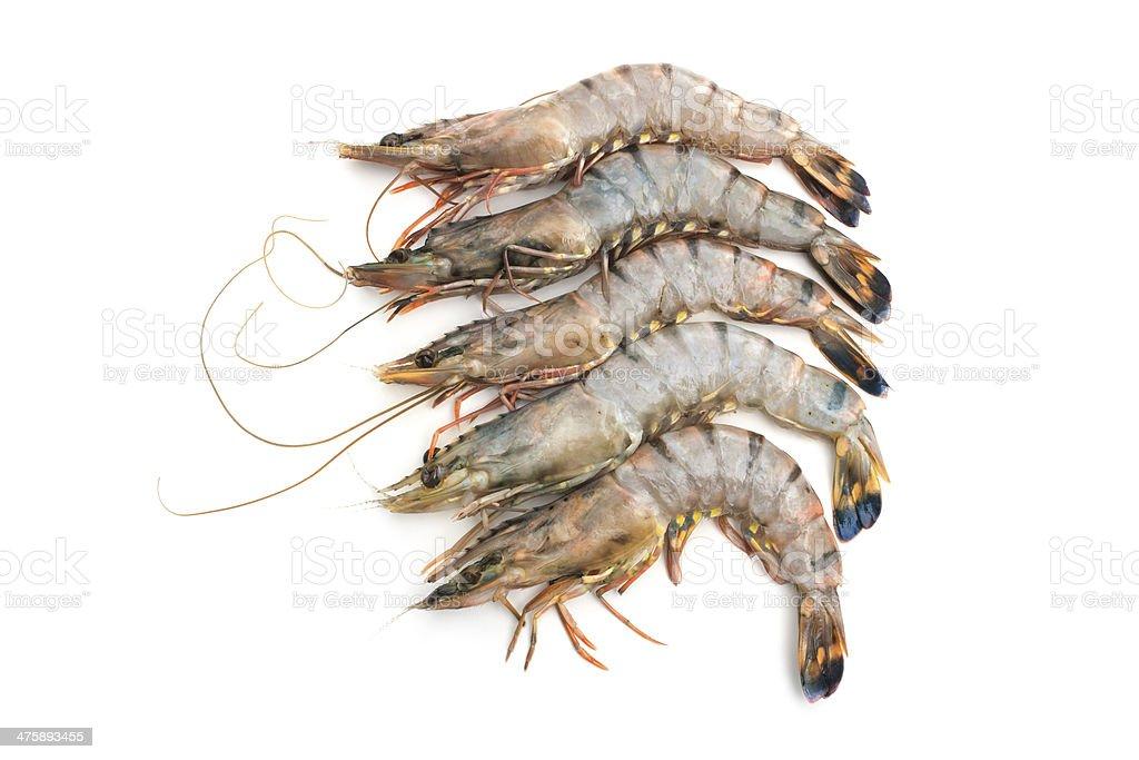 raw tiger shrimps royalty-free stock photo