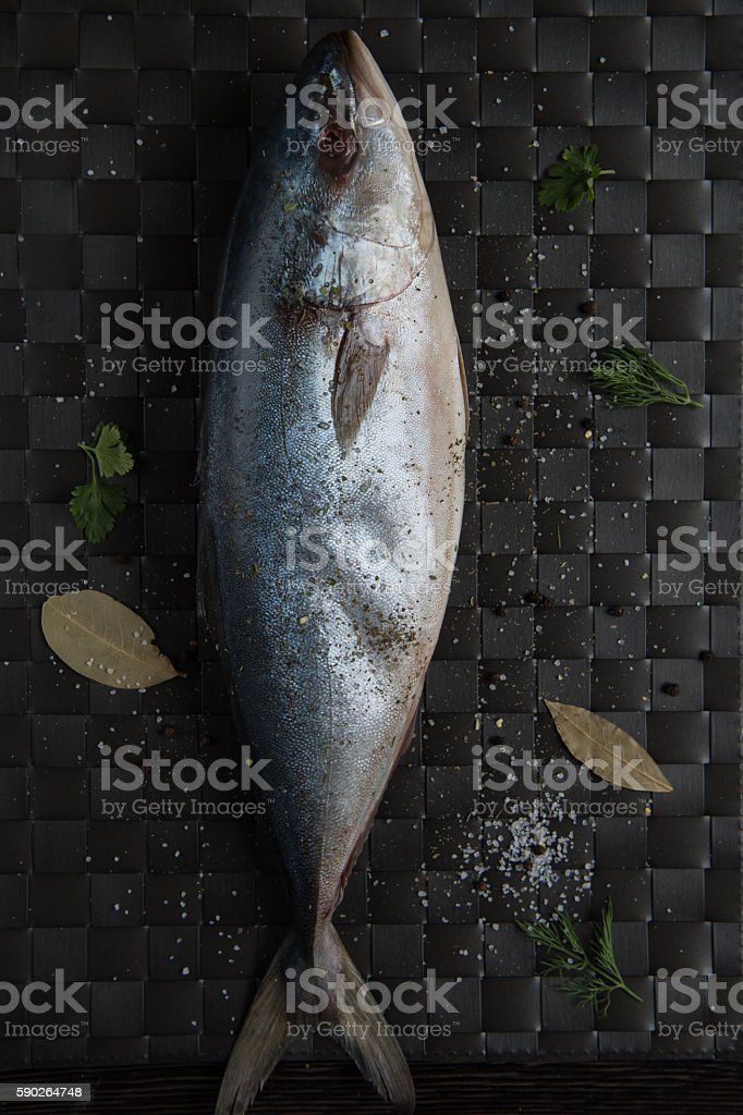 raw tuna fish stock photo