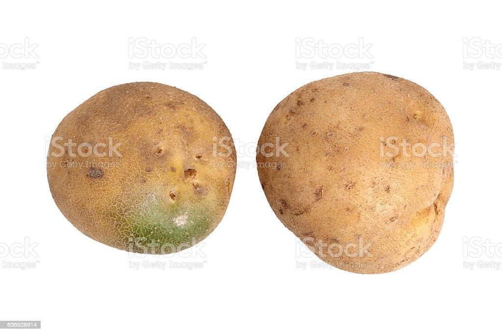 Raw unpeeled potato with green skin stock photo