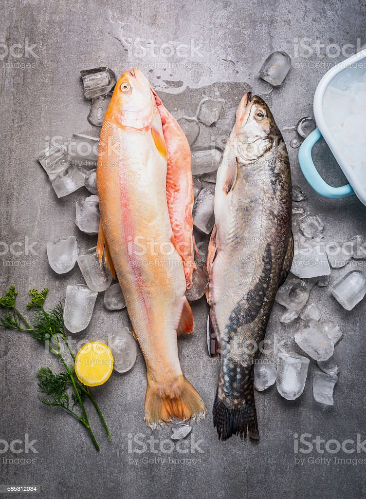 Raw whole trouts with ice cubes on concrete stone background stock photo