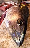 Raw Whole Tuna at Fish Market (Close-Up)