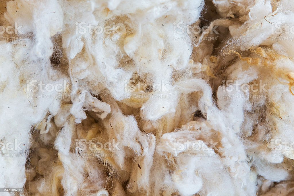 Raw wool stock photo