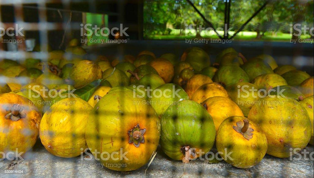 Raw Yellow Sapote stock photo