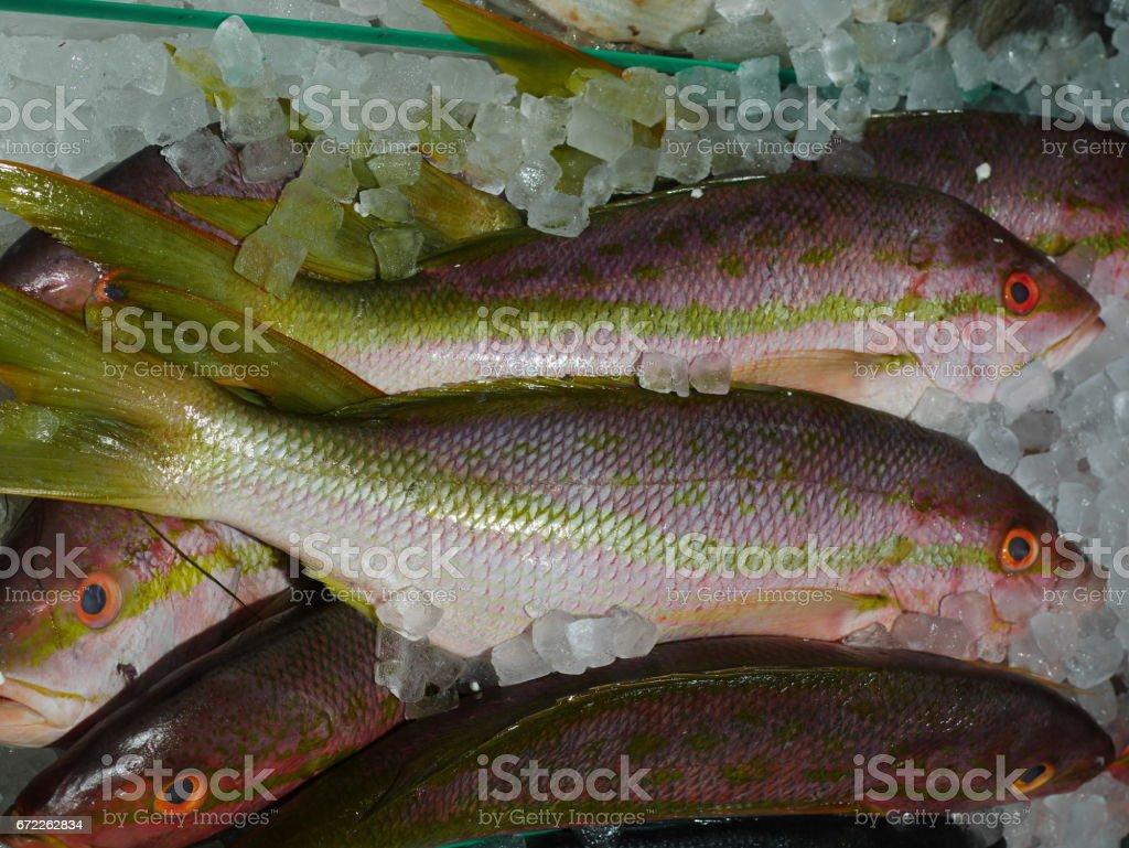 Raw Yellow Tail Snapper Fish stock photo