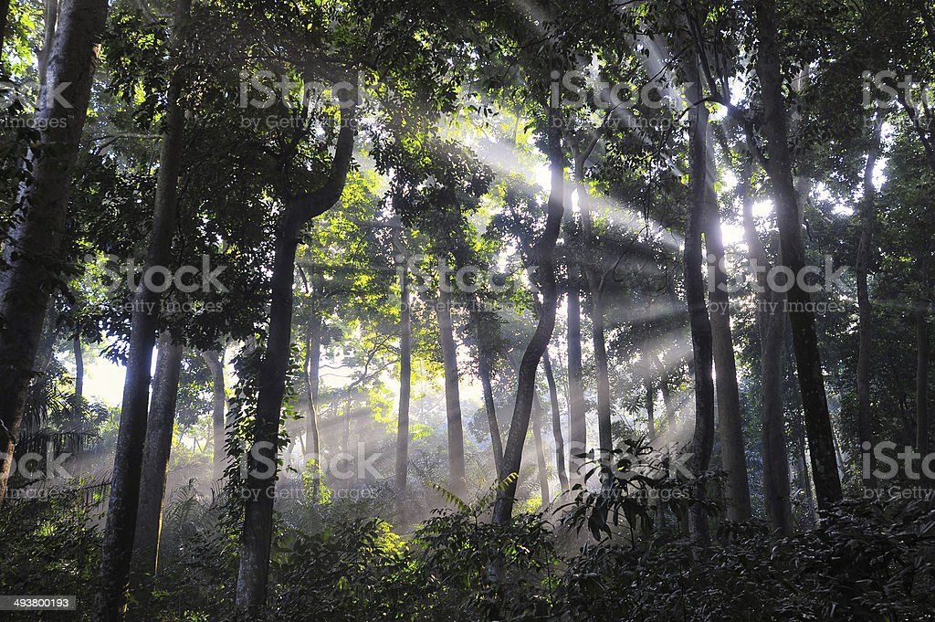 Ray of light at the forest stock photo