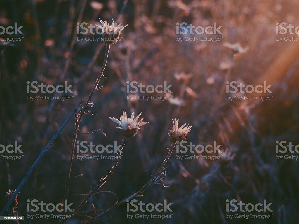 Ray of Sunlight on Flowers stock photo