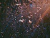 Ray of Sunlight on Flowers