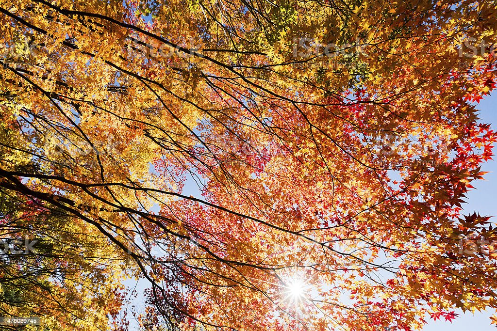 Ray Through Autumn Trees royalty-free stock photo