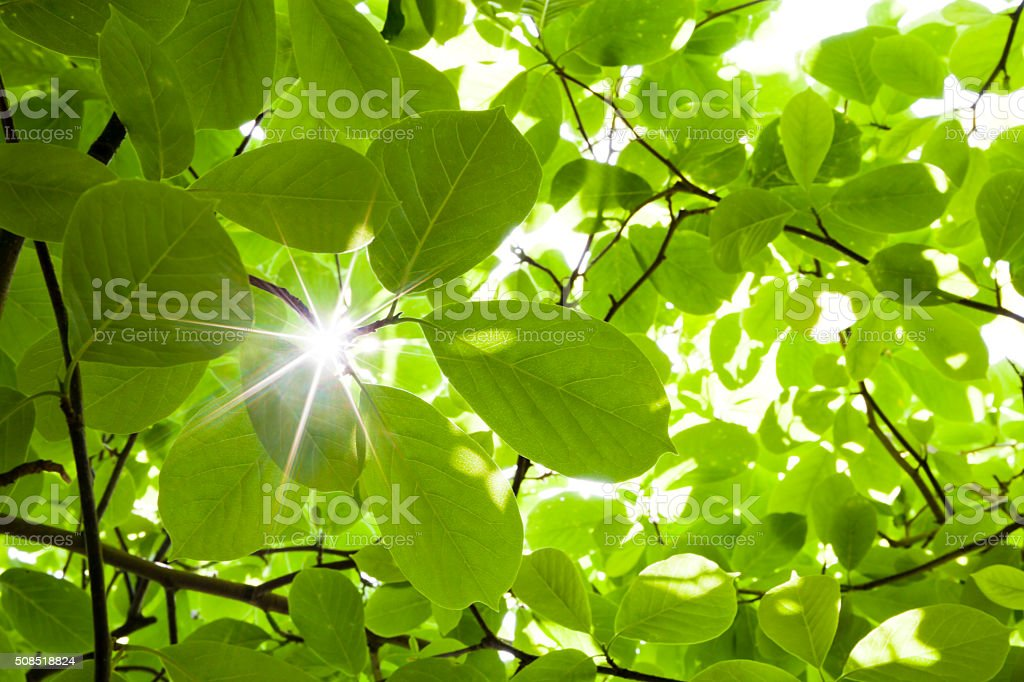 Ray Through Lush Forest Plants stock photo