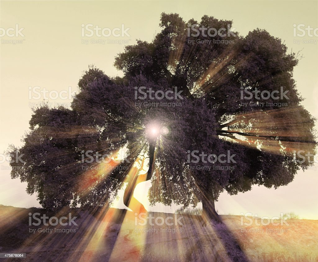 Rays of light through the trees stock photo