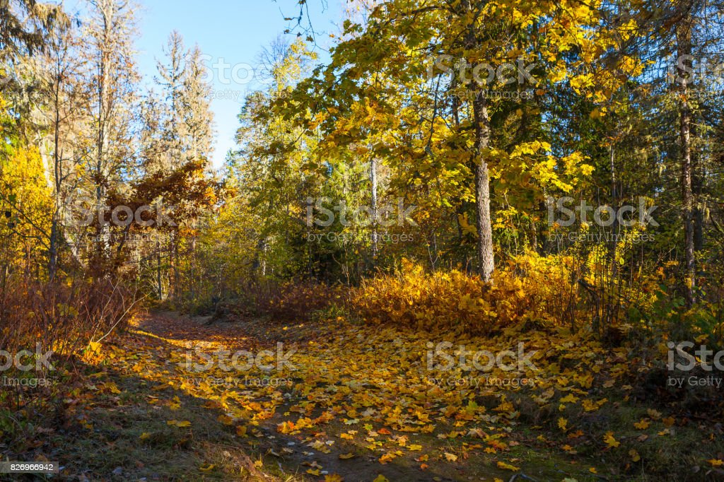 Rays of sun on colorful path in autumn park. Bright fall time. stock photo