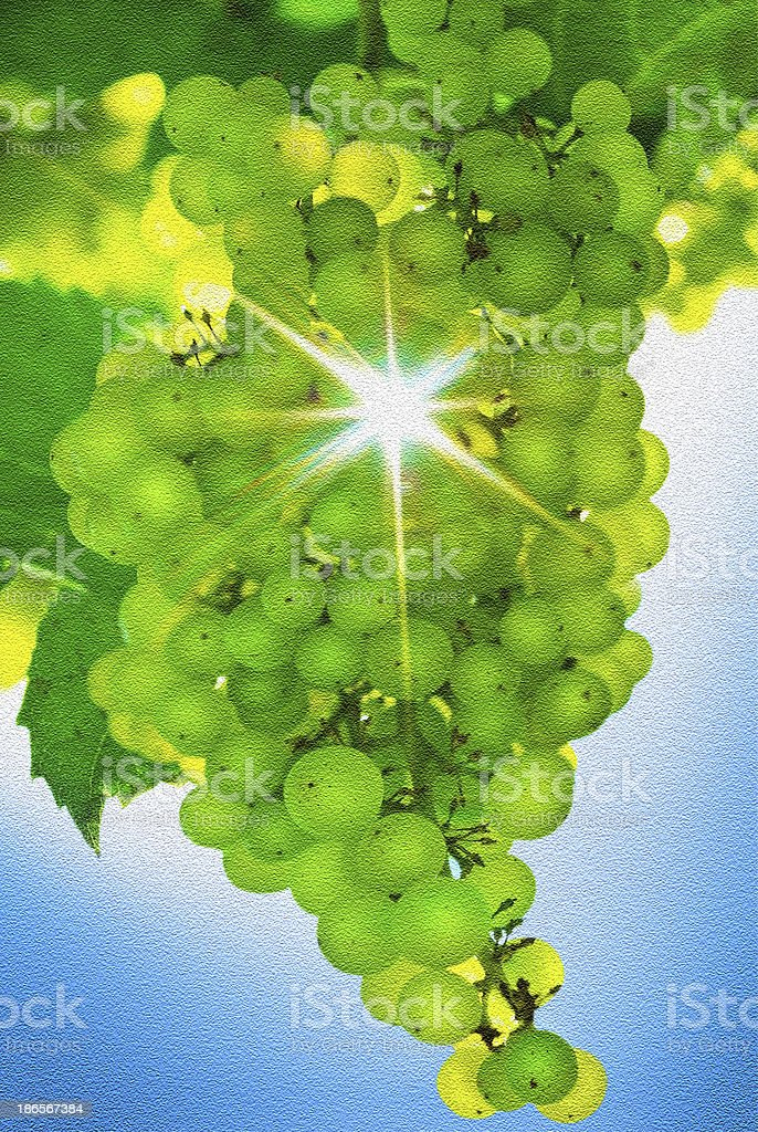 Rays of sun shining in a bunch  grapes. royalty-free stock photo