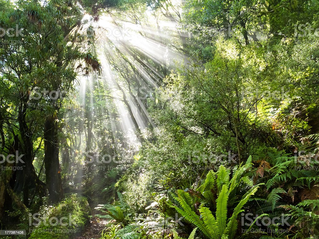 Rays of sunlight beam trough dense tropical jungle stock photo