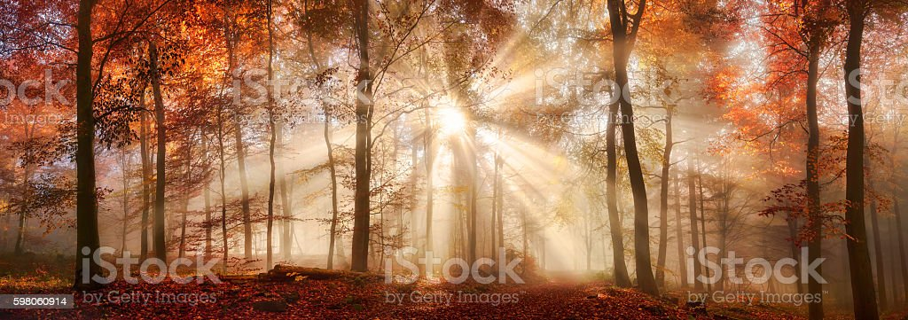 Rays of sunlight in a misty autumn forest stock photo