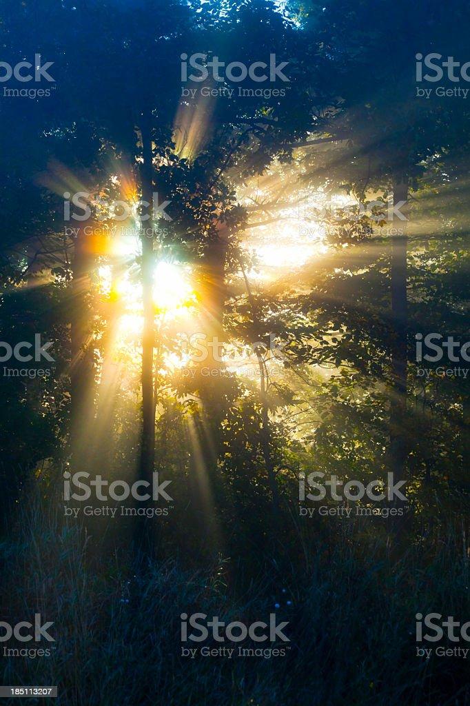 Rays Of Sunshine Illuminate Misty Morning Forest stock photo