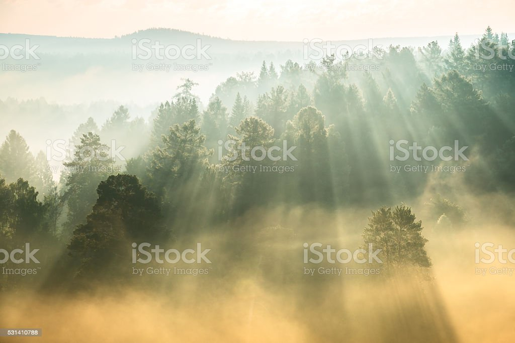 rays of the sun breaking through the fog stock photo