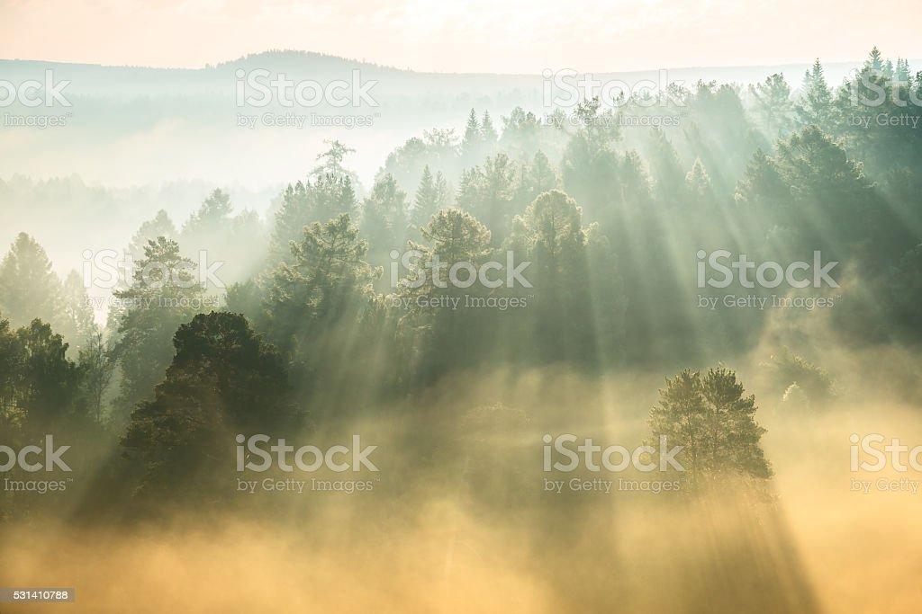 rays of the sun breaking through the fog stock photo