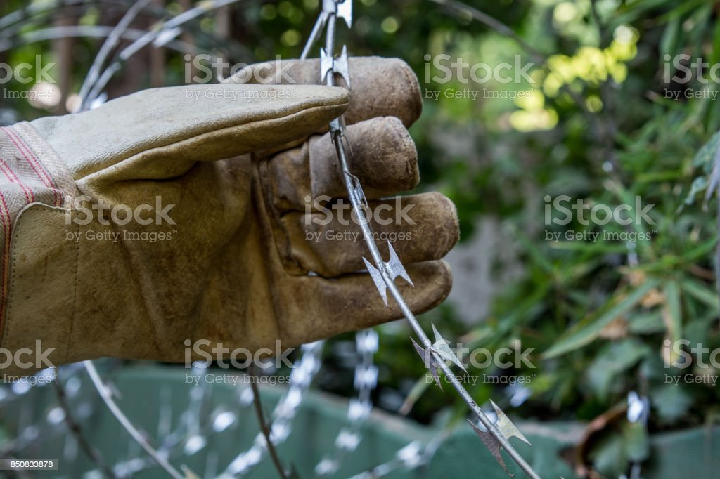 Razor Wire with gloved hand holding it stock photo