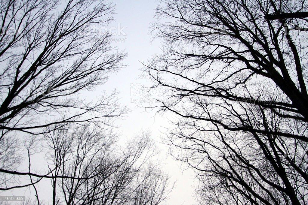 árboles zbiór zdjęć royalty-free