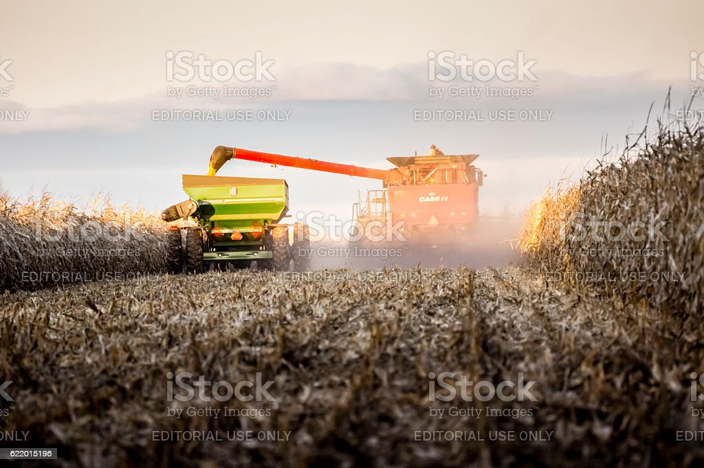 Récolte de maïs en automne stock photo