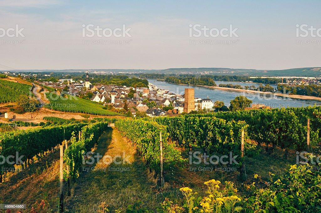 Rüdesheim with evening vineyard stock photo