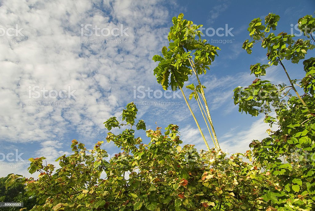 reach out for the skies royalty-free stock photo