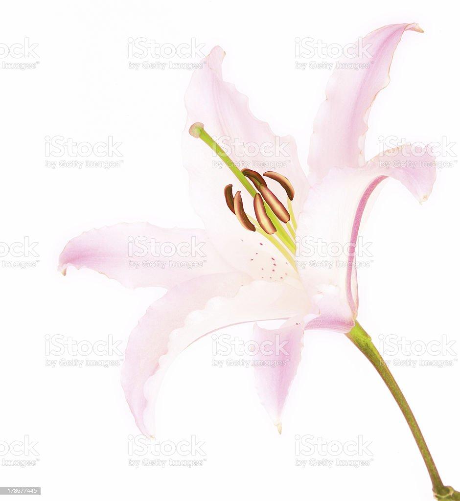 Reaching Flower stock photo