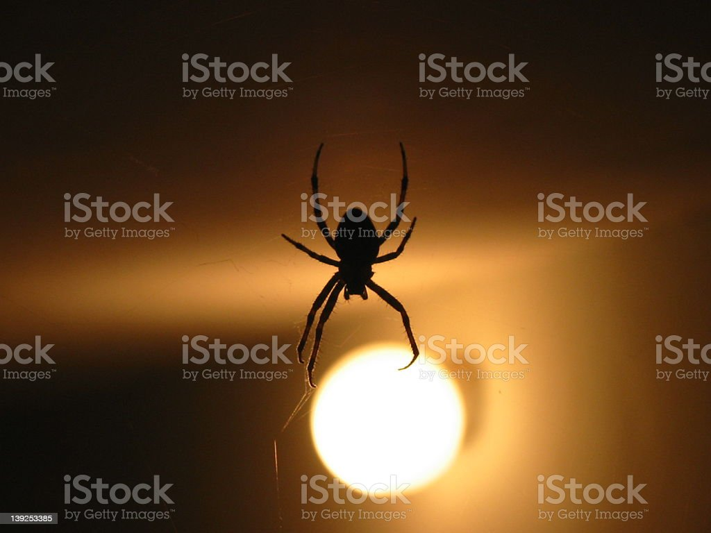 Reaching for the light royalty-free stock photo