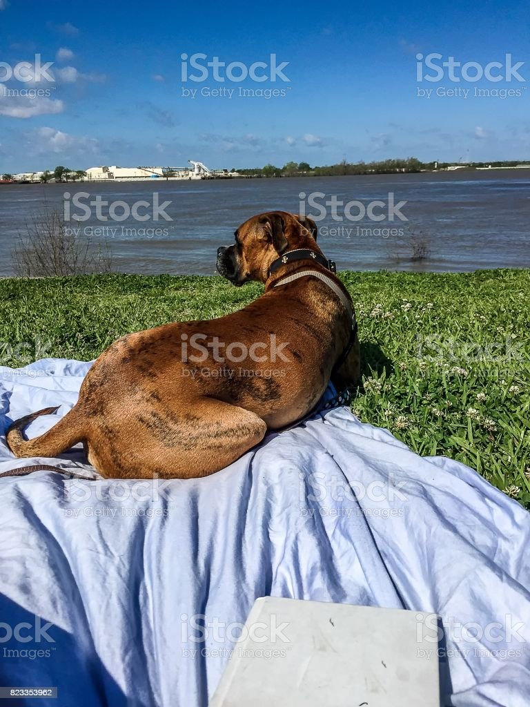 reading a book and lounging with dog by the river stock photo