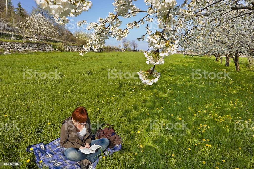 Reading among cherry blossom in Valpolicella, Italy royalty-free stock photo