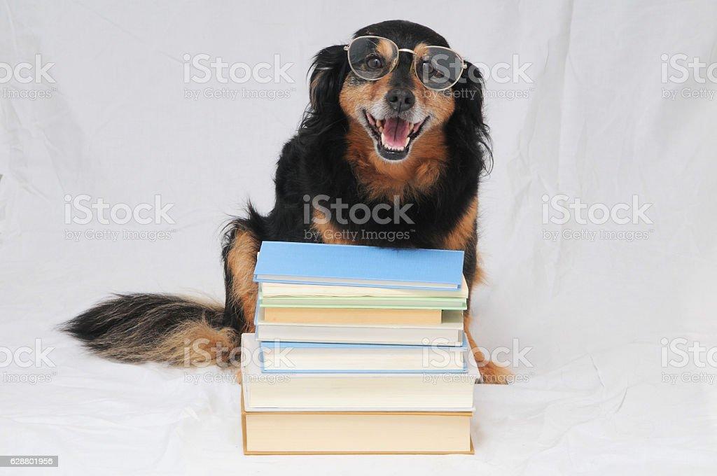 Reading Dog stock photo