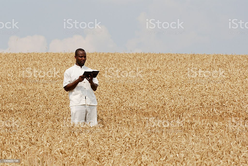 Reading the Bible in a wheat field royalty-free stock photo