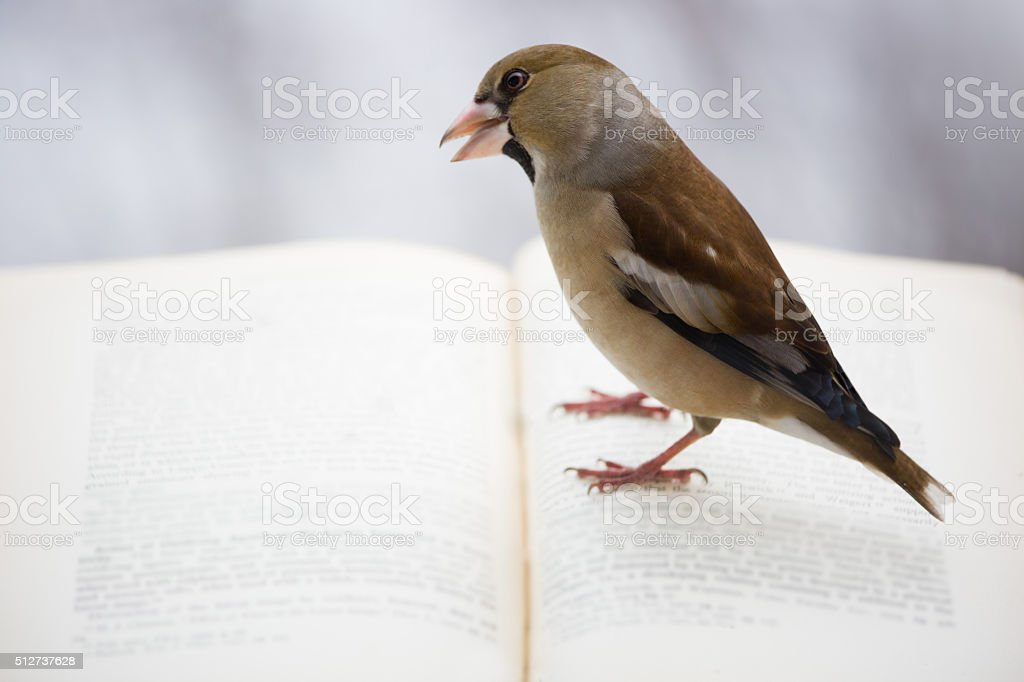Read-only user stock photo
