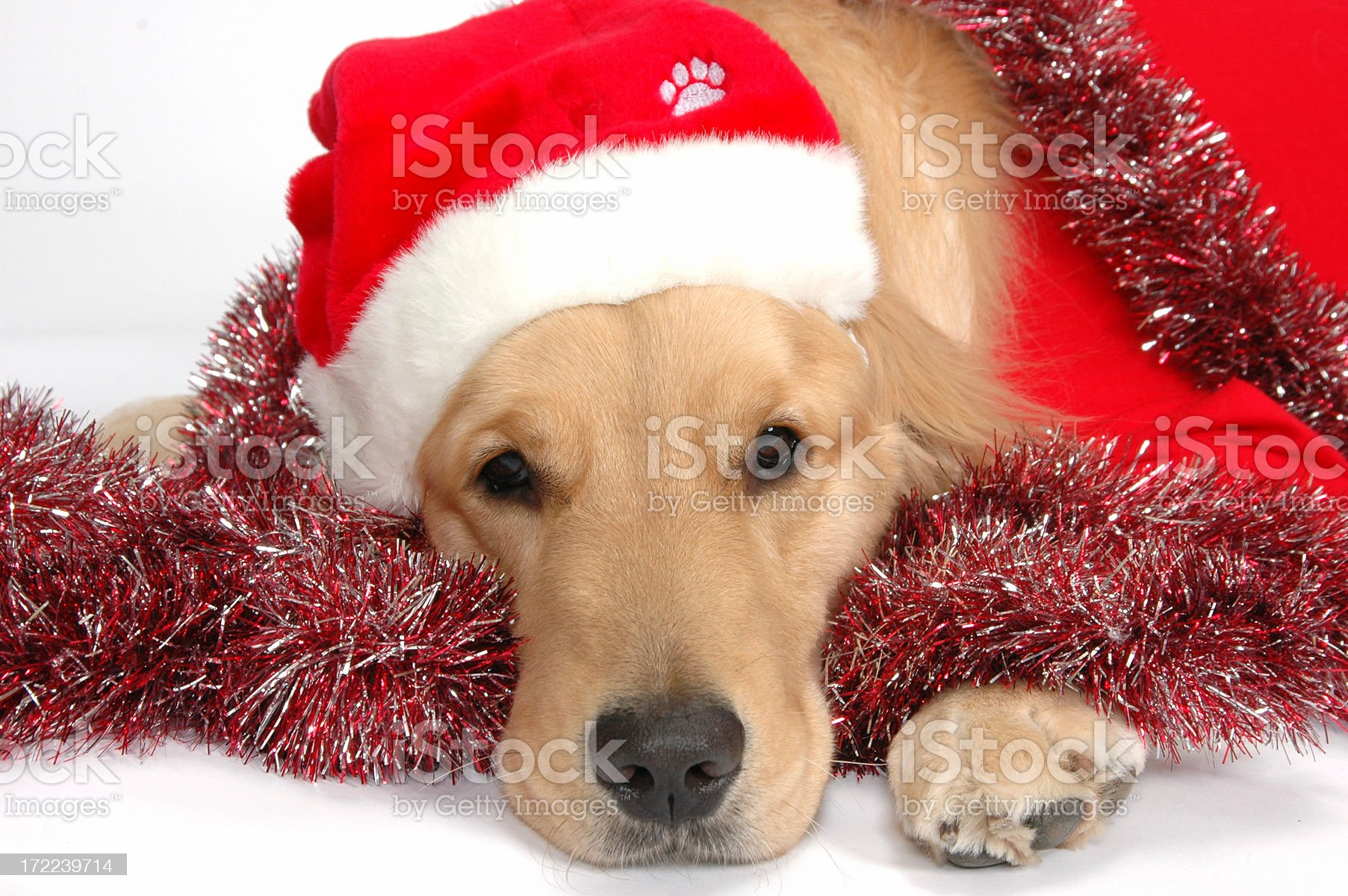 Ready for Christmas royalty-free stock photo