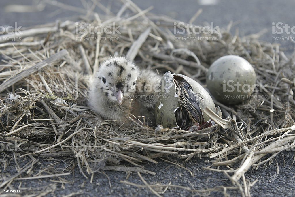 Ready for New Life royalty-free stock photo