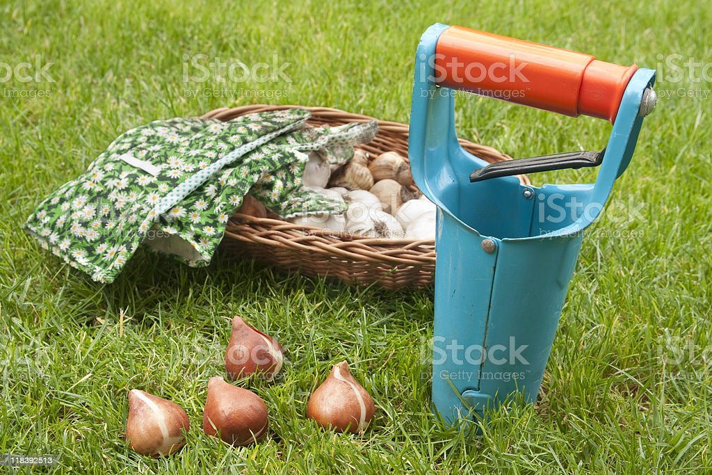 ready for planting bulbs stock photo
