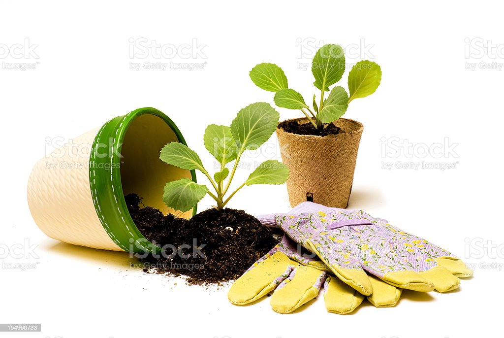 Ready for Planting royalty-free stock photo